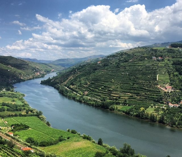 Douro Valley View from the N-222