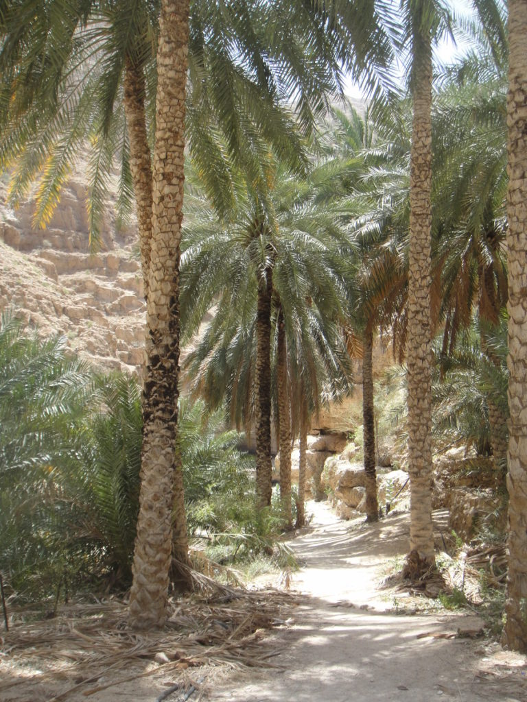 Hiking at Wadi Shab